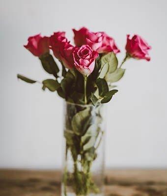 Classic Valentine Roses